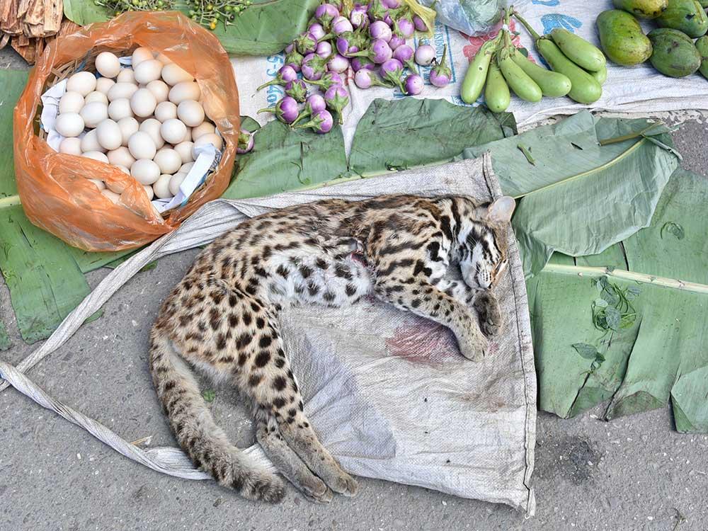 Wildtiermarkt, Tiger, Wildtierhandel, Markt, Asien, Schwarzmarkt